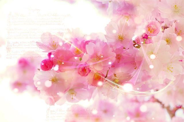 Cseresznye képek