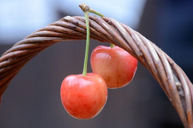 Hólyagos cseresznye