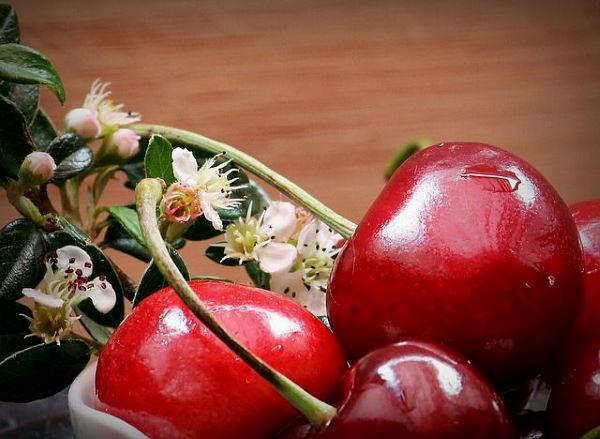 Kései cseresznye fajták